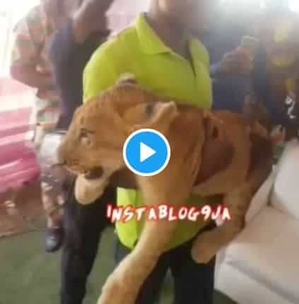 Businessman Storms His Father's Burial Ceremony With A Lion